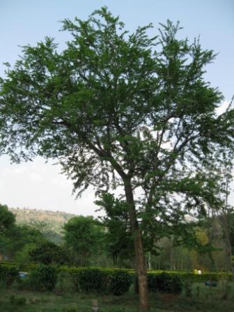 Tamil Nadu Treepedia