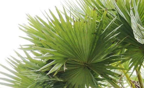 Drought Resistant Trees Tamil Nadu